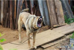 viciousdog